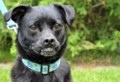 <b>Adopt Me:</b> Basil the pug medley (adopted)