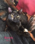 <b>Adopt Me:</b> Raven loves all the toys