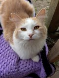 <b>Adopt Me:</b> Sandy is patiently waiting for his fur-ever home