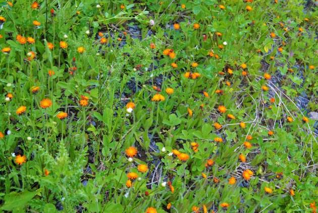 USED 17_0623_Afternoon_orangeflowers