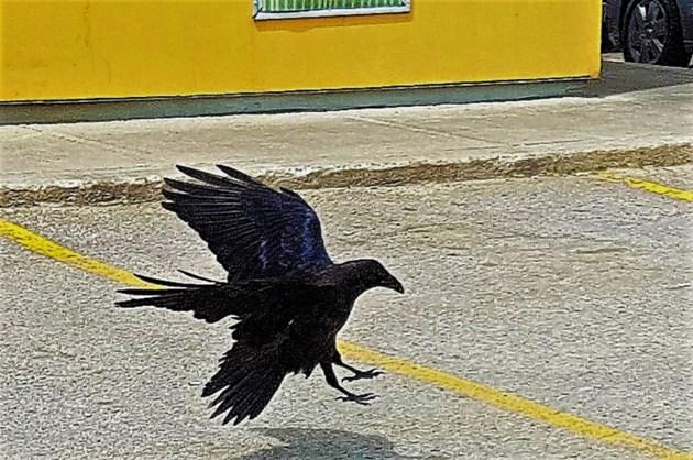 USED 17_0724_Crow Landing_Enlarged_2000pixels